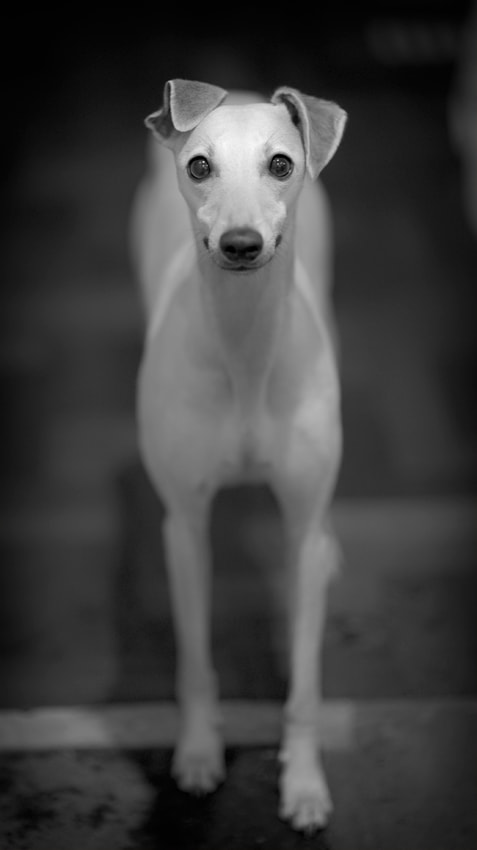 Photograph Hip-note-eyes by Hot Dog Photography on 500px