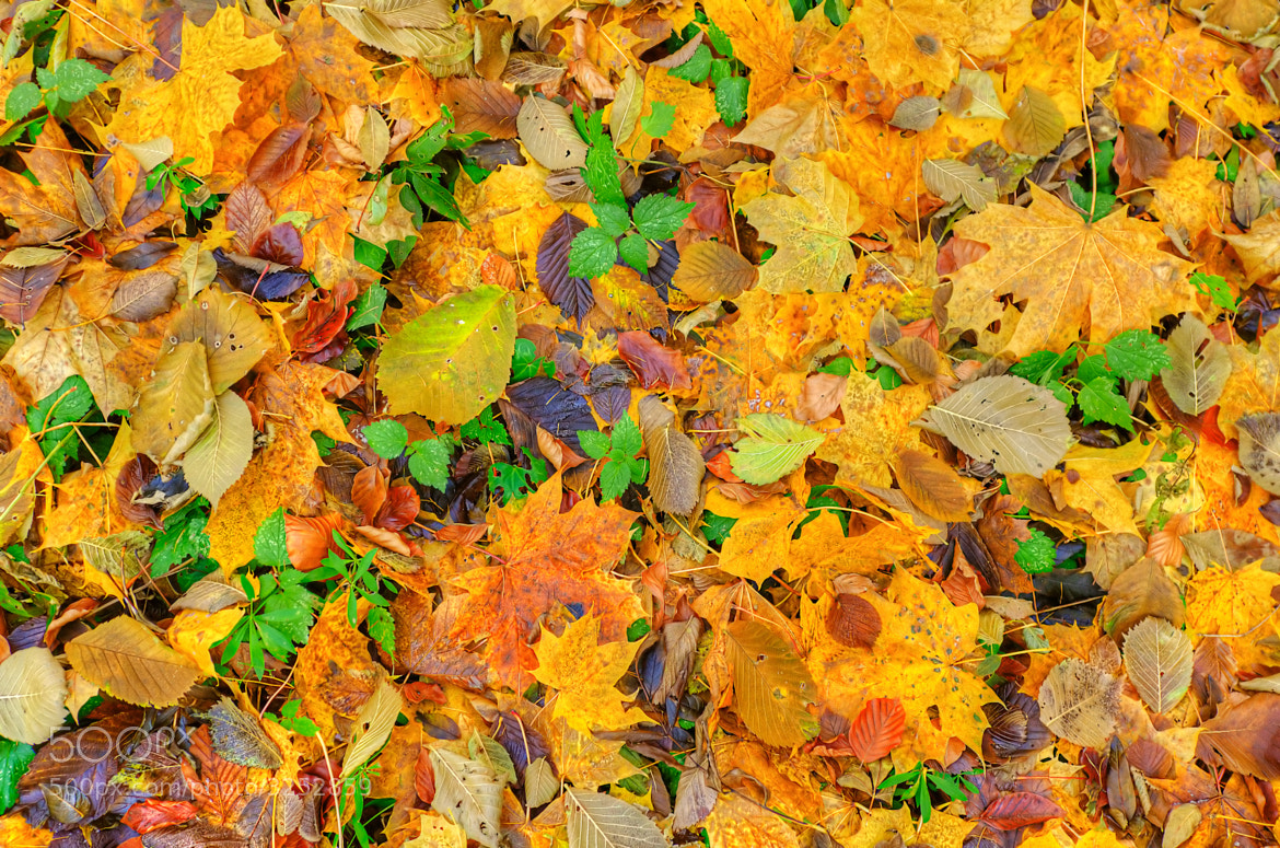 Photograph the colors of autumn by Paul Suess on 500px