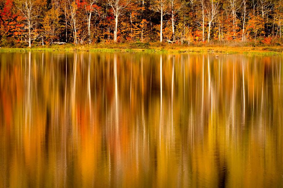 Basin Pond reflections