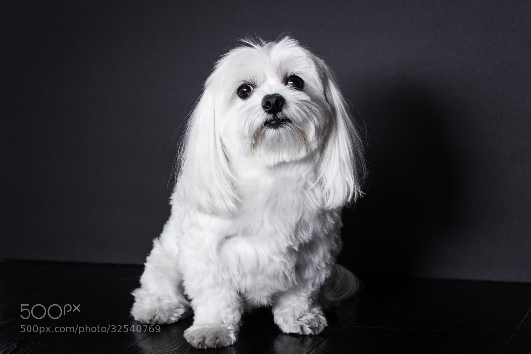 Photograph Black & White Dog by Patrick Sternkopf on 500px