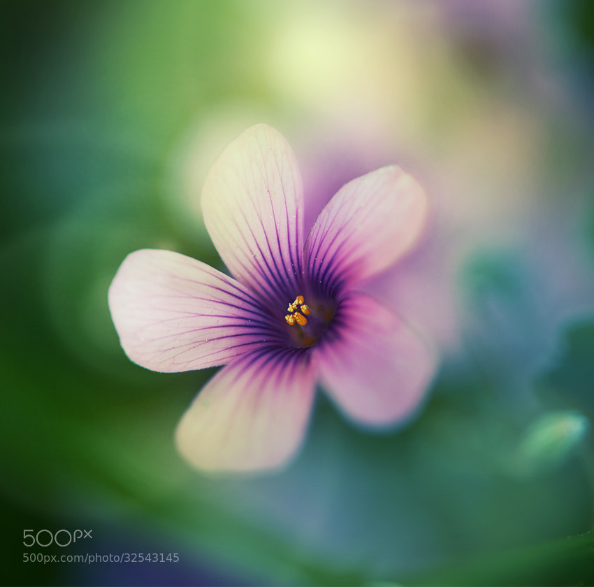 Photograph Soft light by Atsuko Tateno on 500px