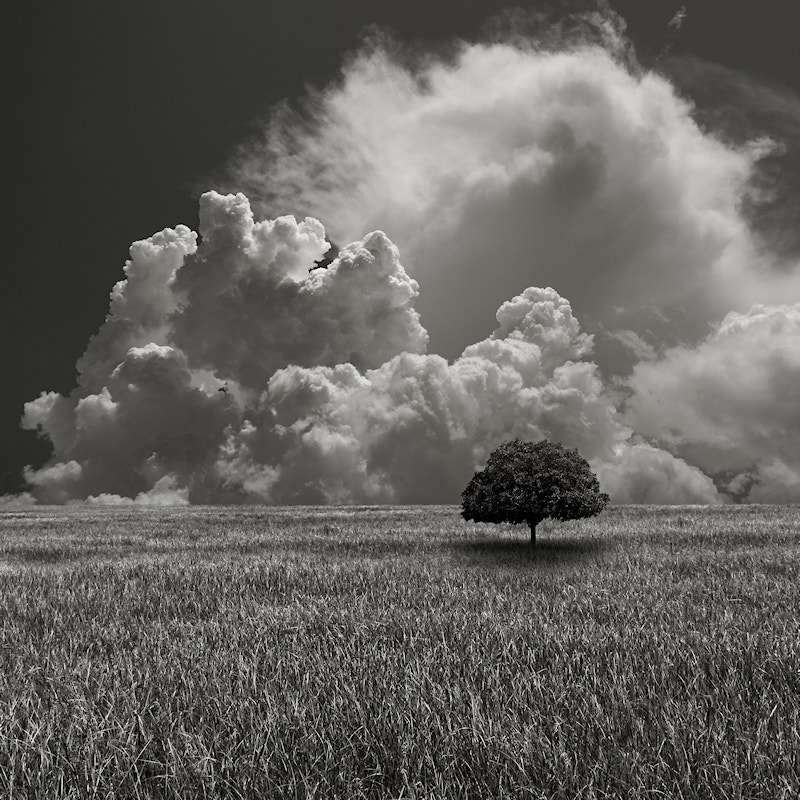 Photograph The Hill's Tree by Carlos Gotay on 500px