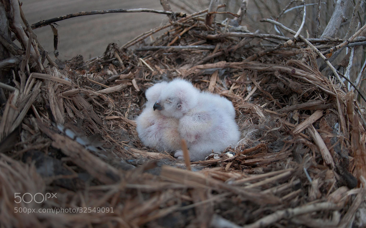Photograph 3 owlets by Kaitlyn Bumstead on 500px