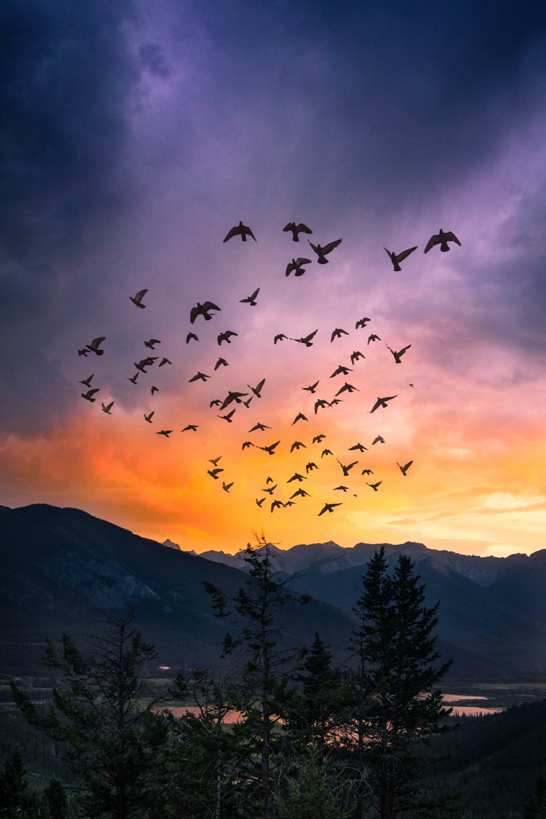 Photograph Fly away by Francesca Tanmizi on 500px