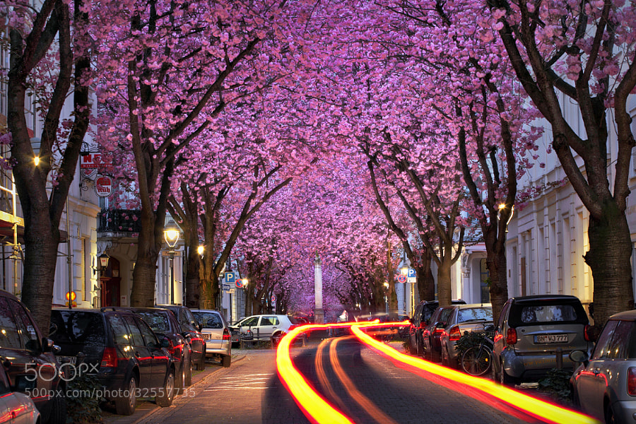 Photograph Cherry Night by Kilian Schönberger on 500px