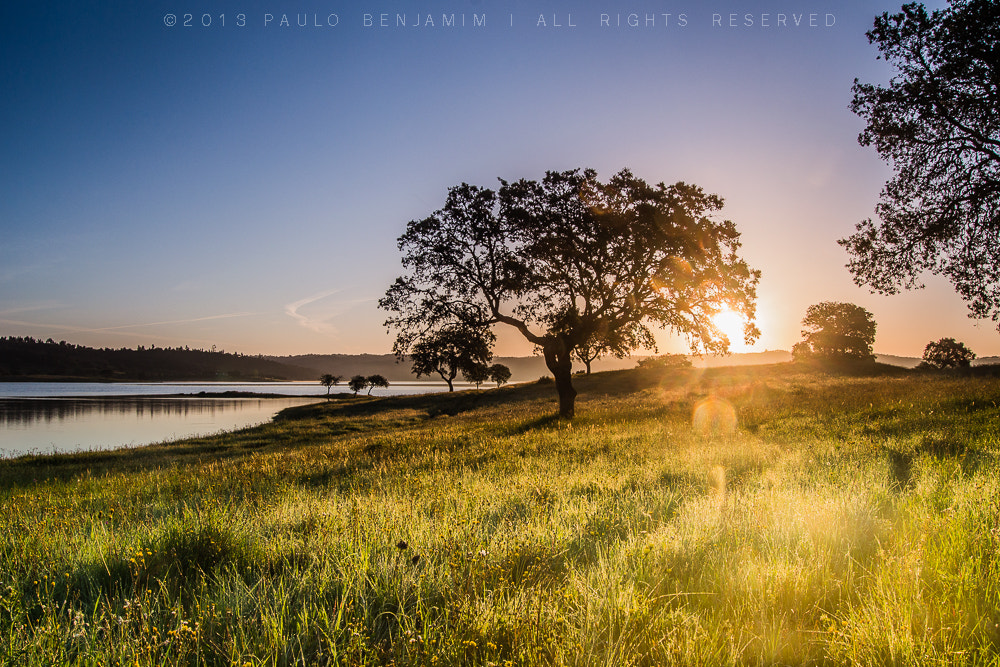 Photograph the sun shinning tree by Paulo Benjamim on 500px