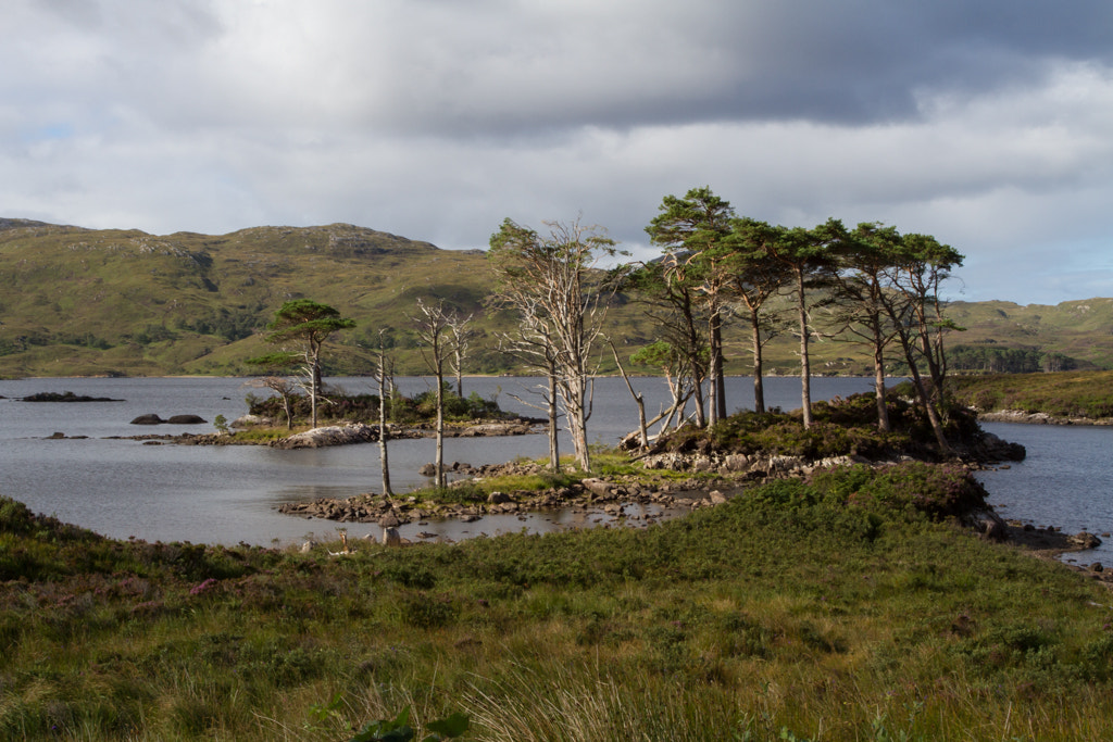Photograph Loch Assynt by Joerg Knoerchen on 500px