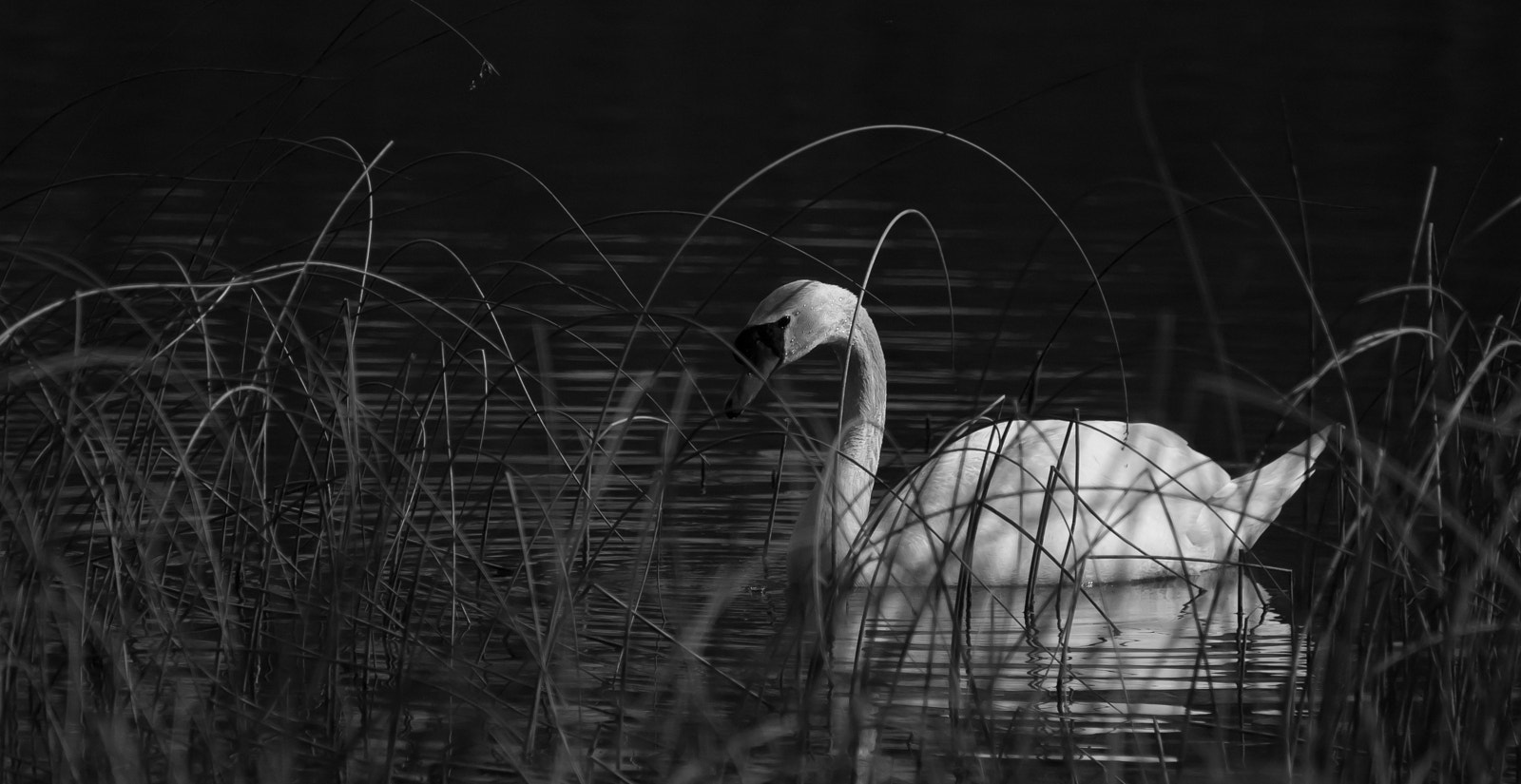 Photograph Waiting in the reeds... by SirJaymes on 500px