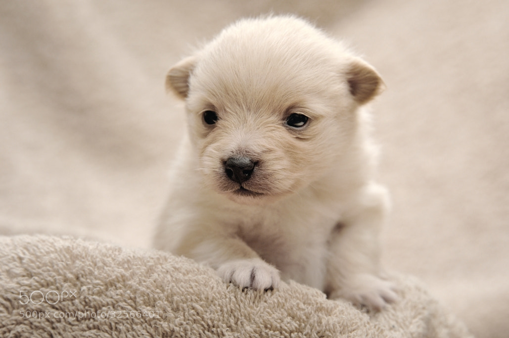 Photograph Puppy by Tomoaki Yoshimi on 500px