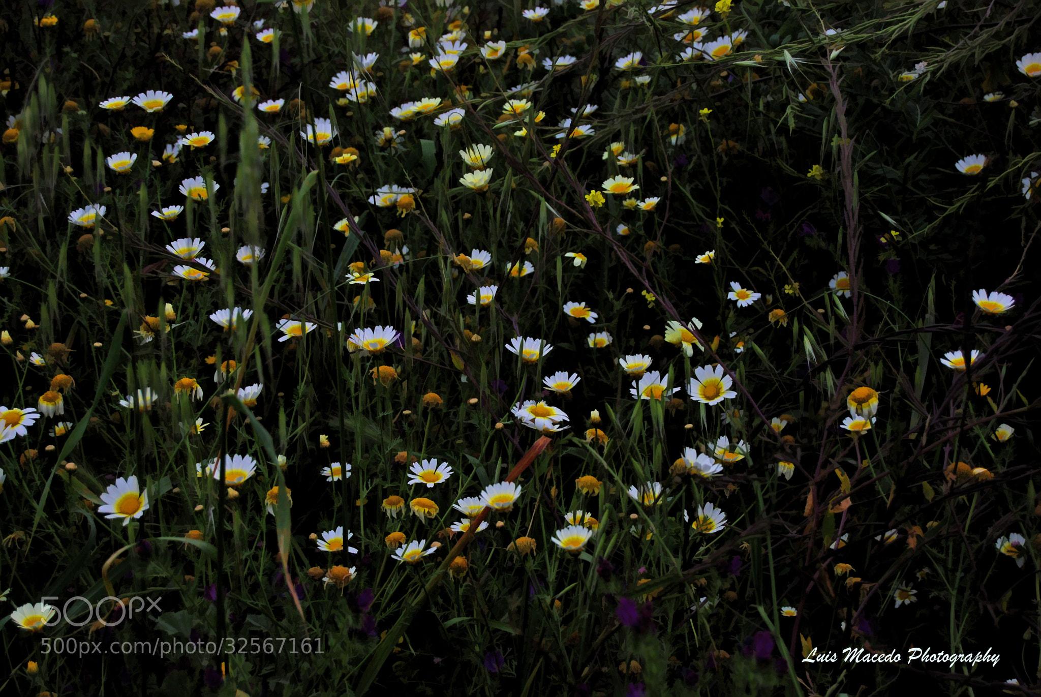 Photograph Tavira - Each Corner A  Garden  by Luis Pereira on 500px