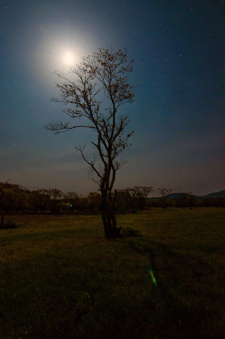 Photograph Moonlight by Mr. King on 500px