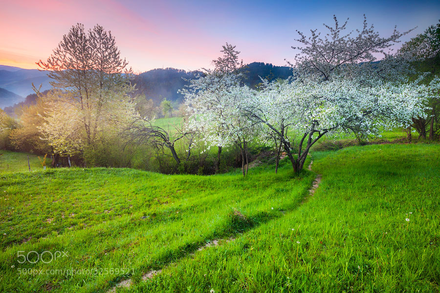 Photograph Spring by Evgeni Dinev on 500px