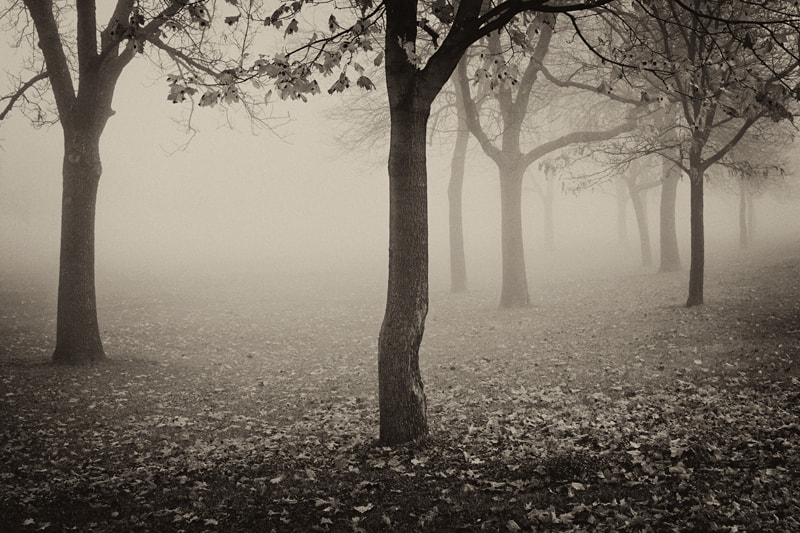 Photograph A foggy morning by Lu Zhang on 500px
