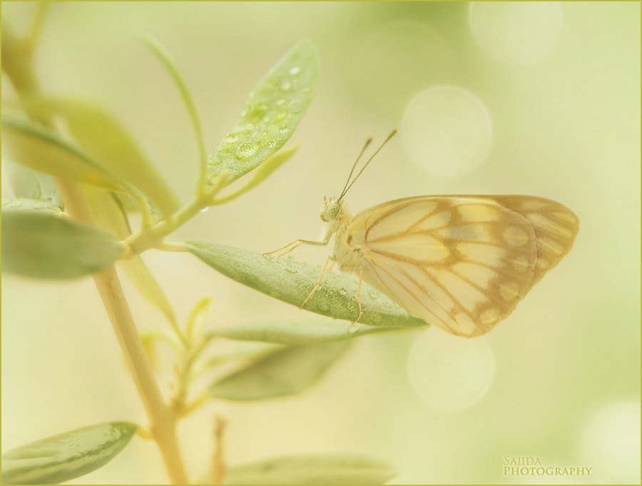 Photograph Butterfly in the rain by Sajida  on 500px