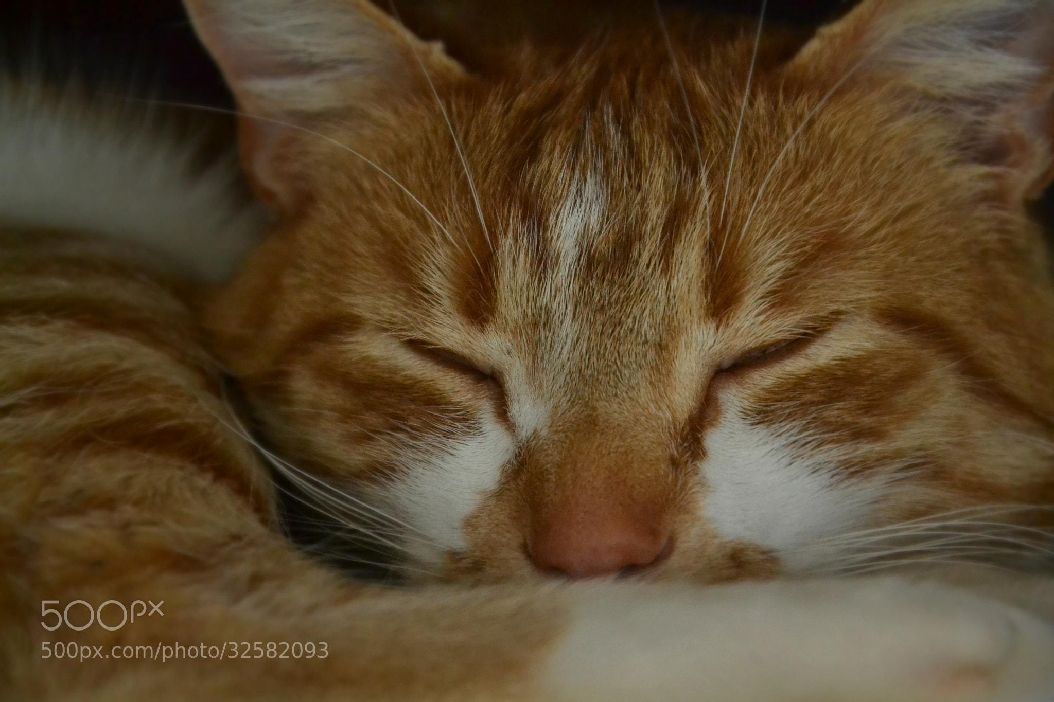 Photograph sleeping by Jana Bgr on 500px