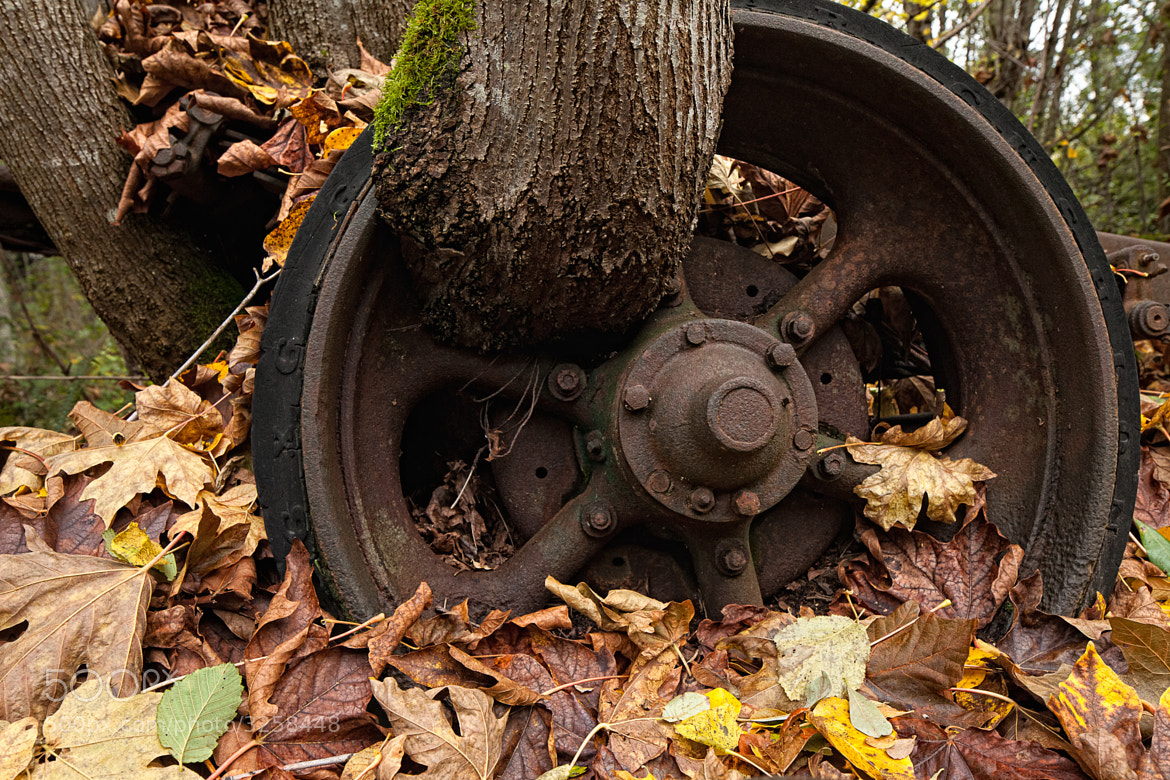Photograph Tree vs Tire by Joseph Calev on 500px