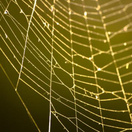 Spidernet