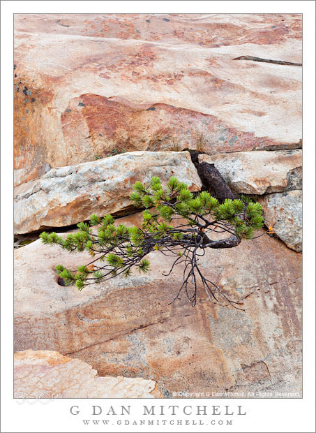 Photograph Tree and Stained Granite by G Dan Mitchell on 500px