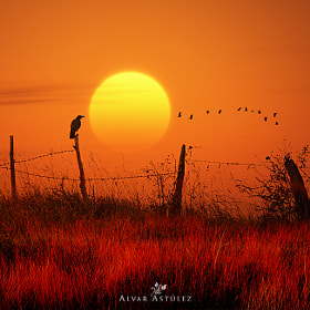 The Raven by Alvar Astúlez (alvar_astulez)) on 500px.com