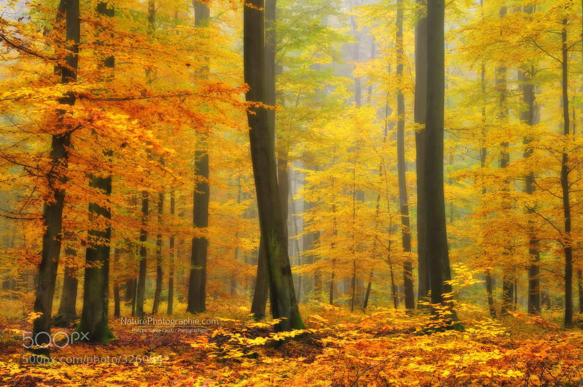 Photograph Orton Forest by Philippe Sainte-Laudy on 500px