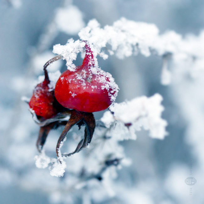 Photograph Red against the cold by Teya Saveleva on 500px