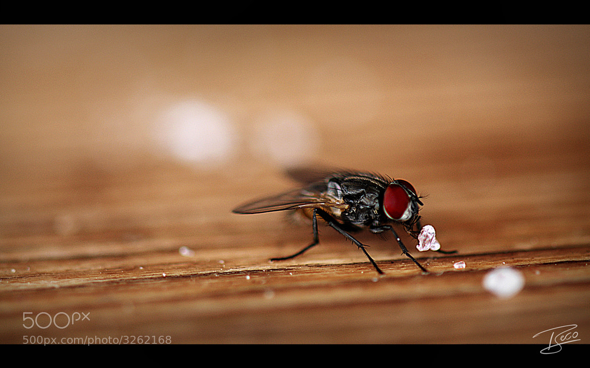 Photograph Mr. Fly and the Sugar Grain by Beco  G. on 500px