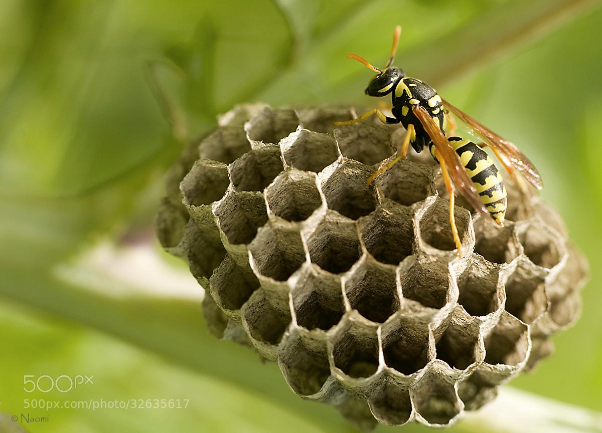 Photograph No honey by Naomi McLeod on 500px