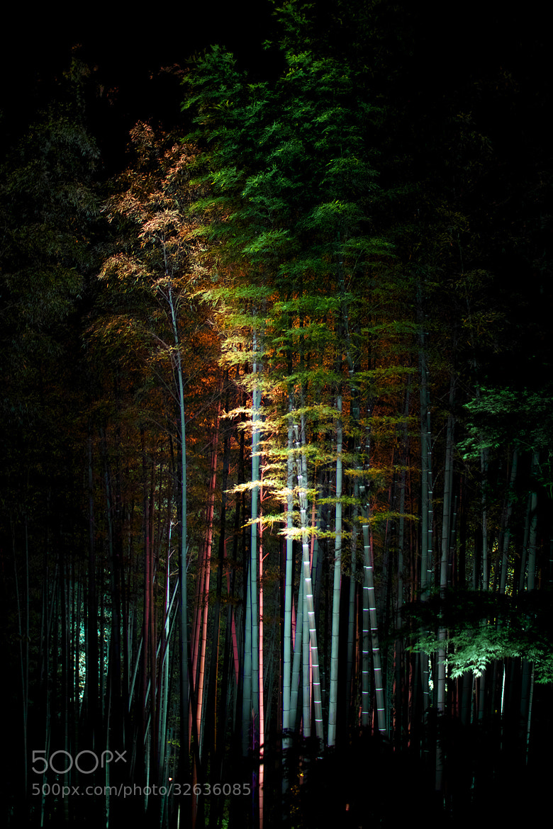 Photograph Bamboo by Azul Obscura on 500px