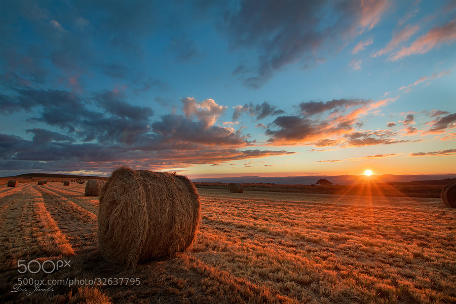 Photograph Hay Sunset by Des Jacobs on 500px
