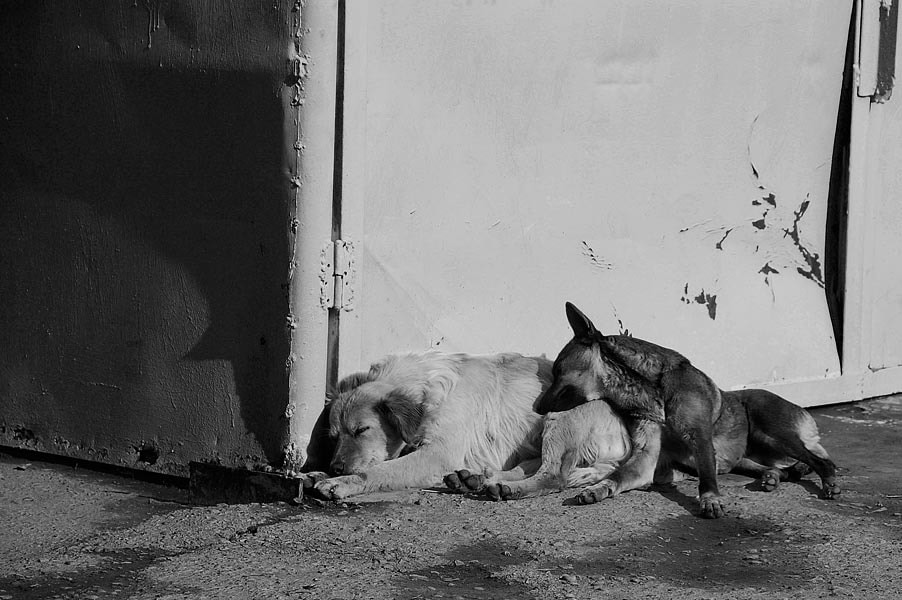 Photograph Two sleeping dogs by Otabek Yuldashev on 500px