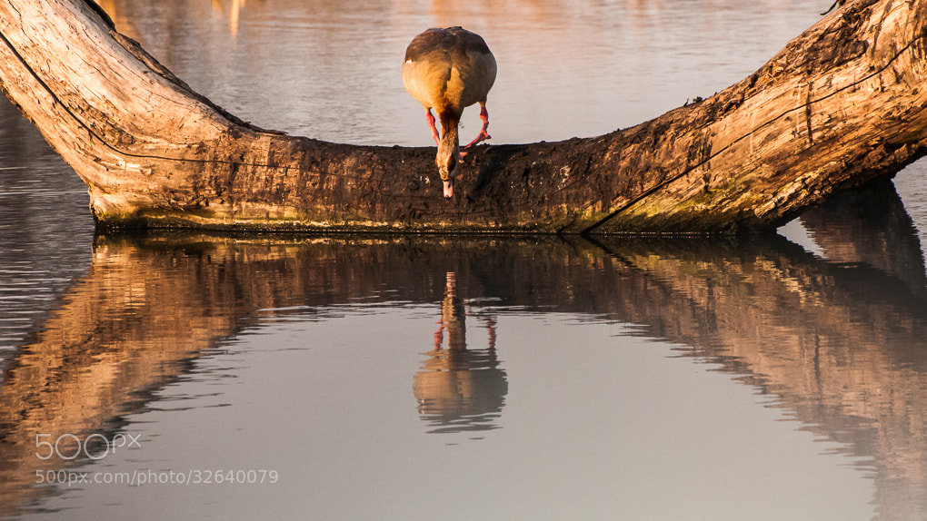Photograph Mirror mirror by Marc Leroy on 500px