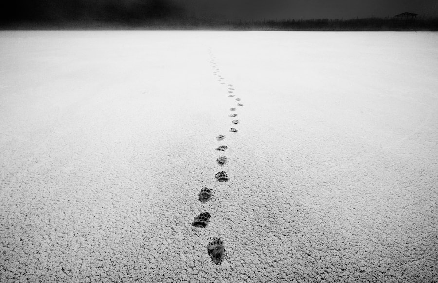 Traces by Ruslan Mukhambetov on 500px.com