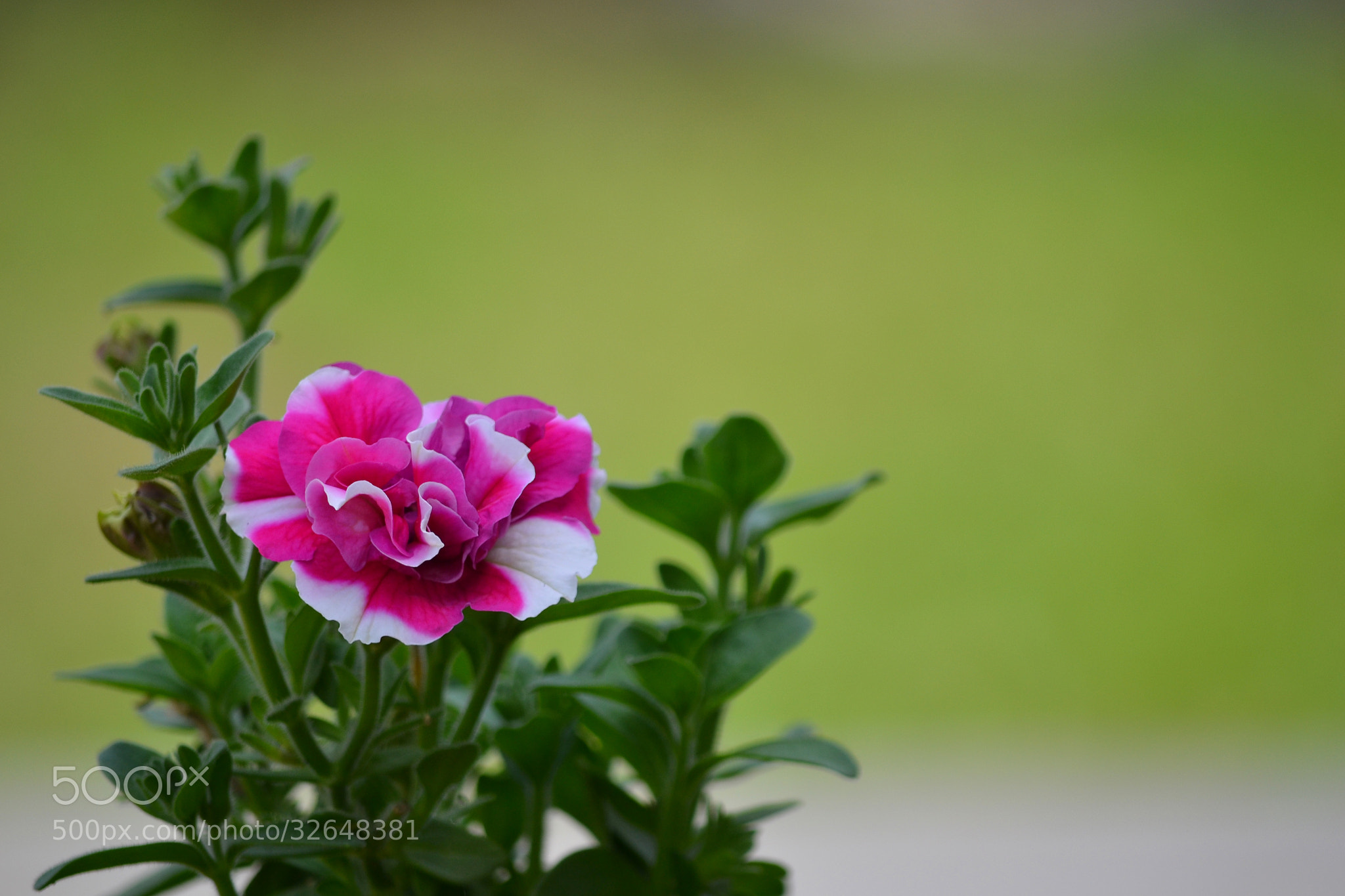 Photograph The may flower by Salvo Mangiaglia on 500px