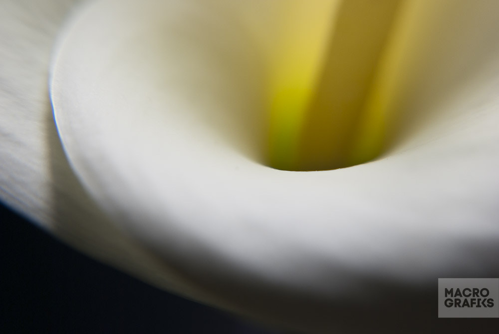 Photograph Lily Calla flower by Macrografiks Stock Photos on 500px