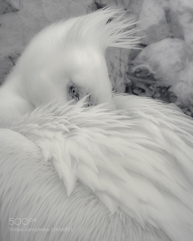 Photograph Alert Slumber by Brandon Downing on 500px