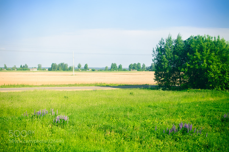 Photograph Summer field by ilya khamushkin on 500px