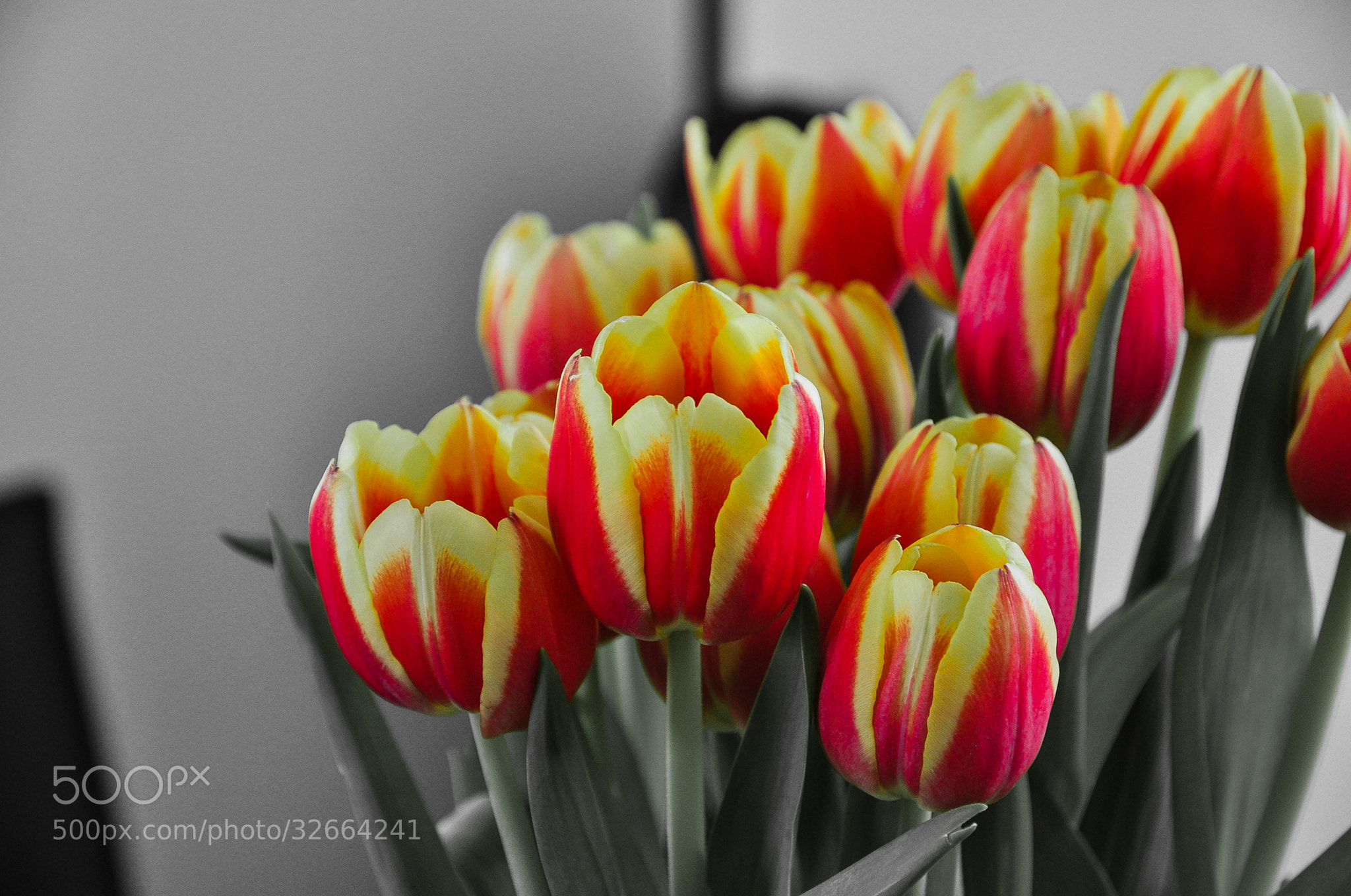 Photograph bunch of tulip by yoshiko wagner on 500px