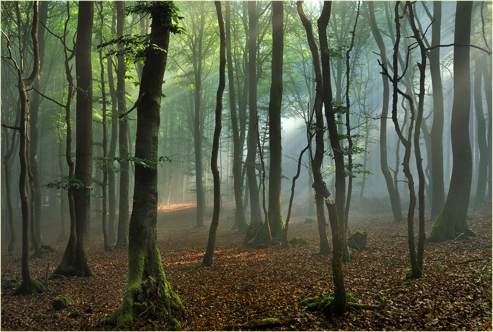 Photograph A morning in the forest by Ingrid Lamour on 500px