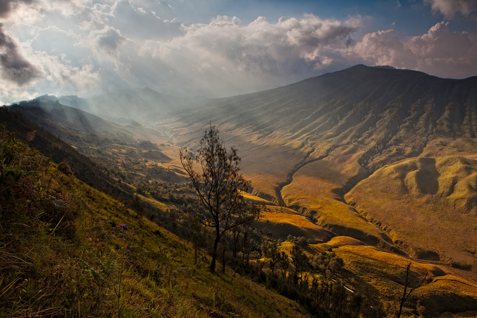Photograph afternoon light by Helminadia Ranford on 500px