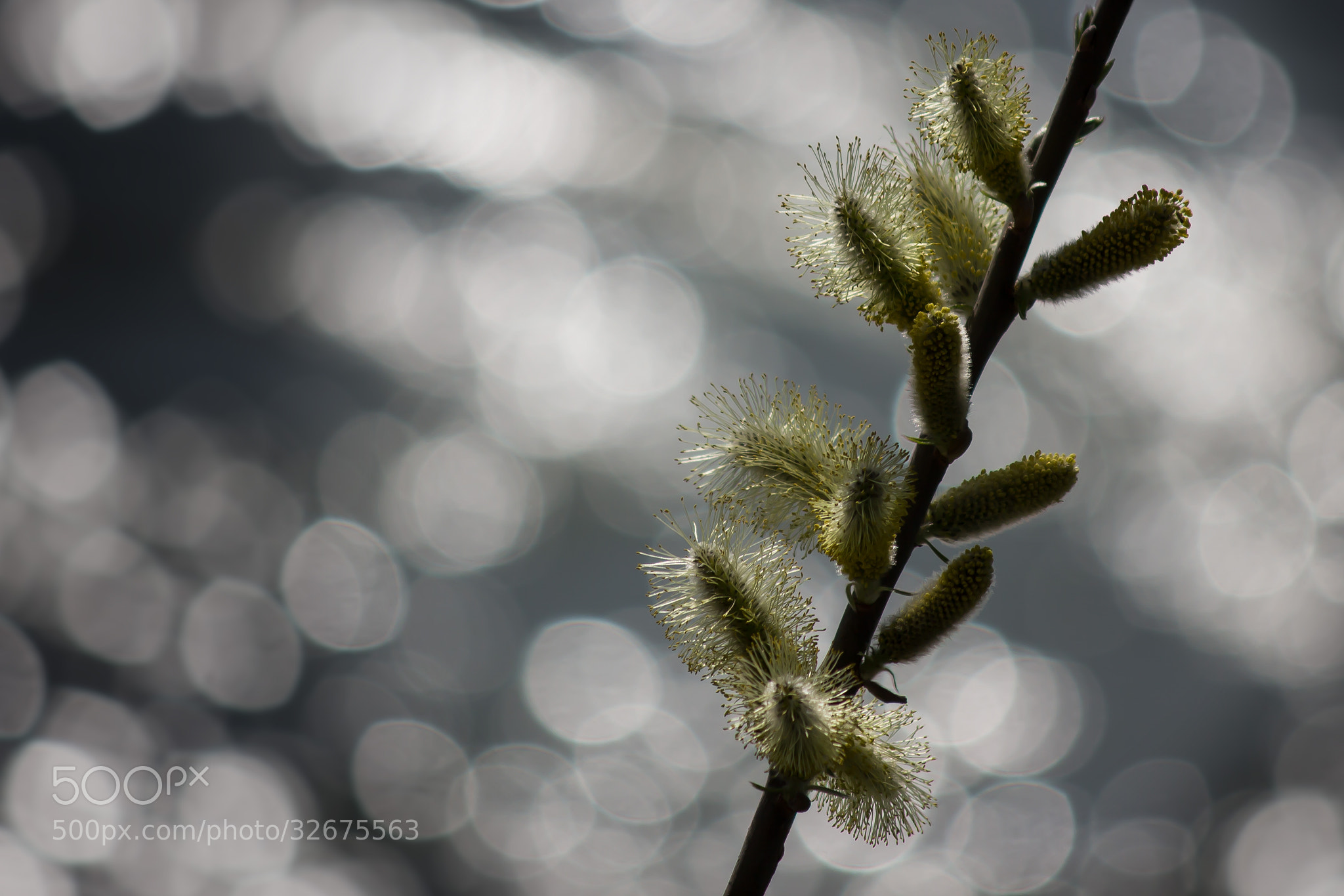 Photograph Dancing towards the light by Moni  on 500px