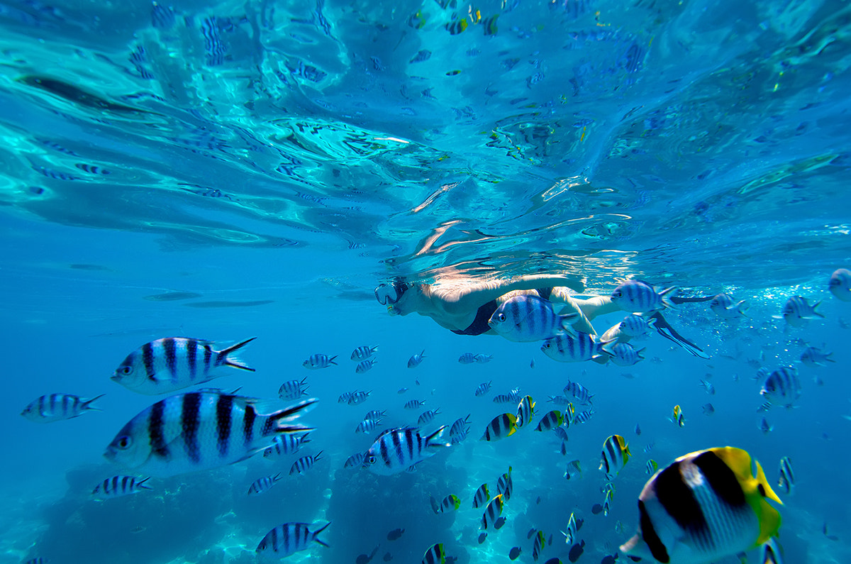 Photograph Swimming with the Fishes by David Kosmos Smith on 500px