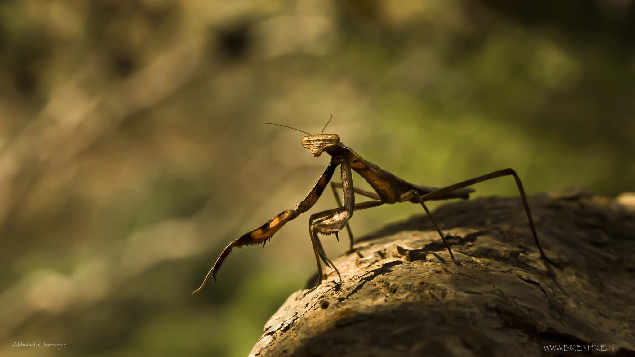 Photograph mantis...in the wild by Abhishek Chatterjee on 500px