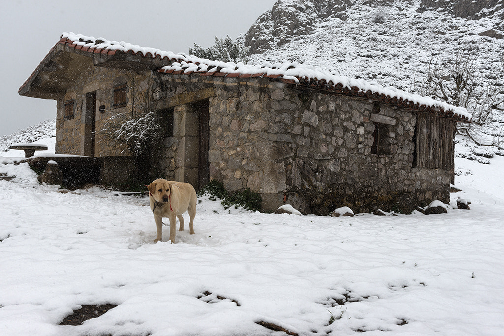 Photograph The Guardian in the snow by Jorge Orfão on 500px