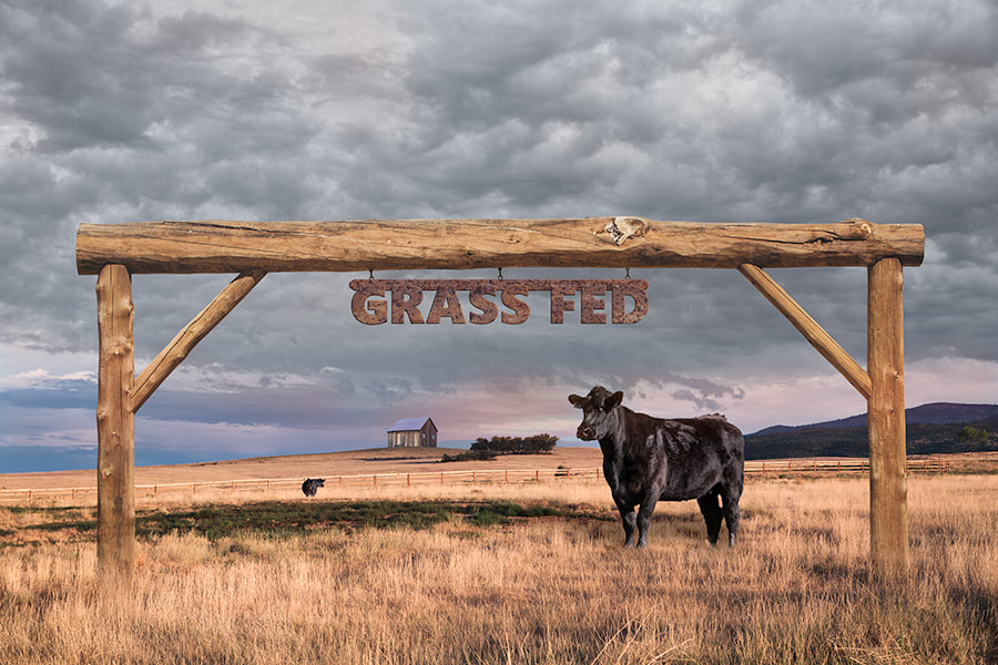 Photograph Grass Fed Angus Beef - Ranch Grassland by Susan McKenzie on 500px