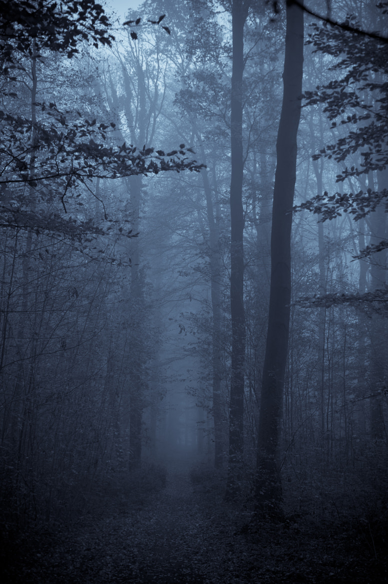 Photograph my story forest by alina stancioiu on 500px