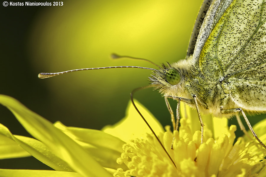 Photograph A Little More Close To You  by Kostas  Nianiopoulos on 500px
