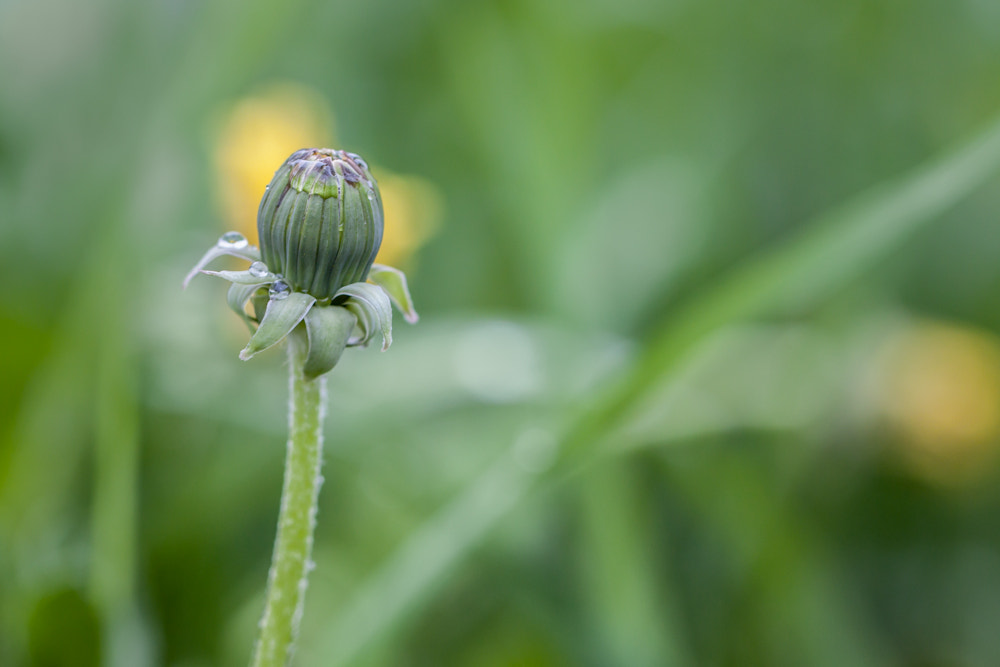 Photograph Pusteblume by Marion Fanieng on 500px