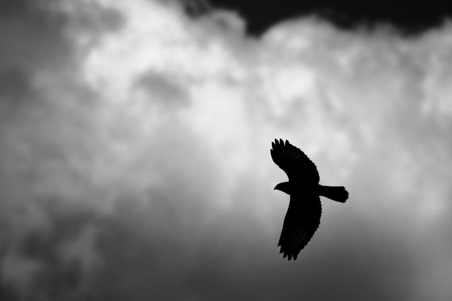 Photograph flying by Nicolas Le Boulanger on 500px