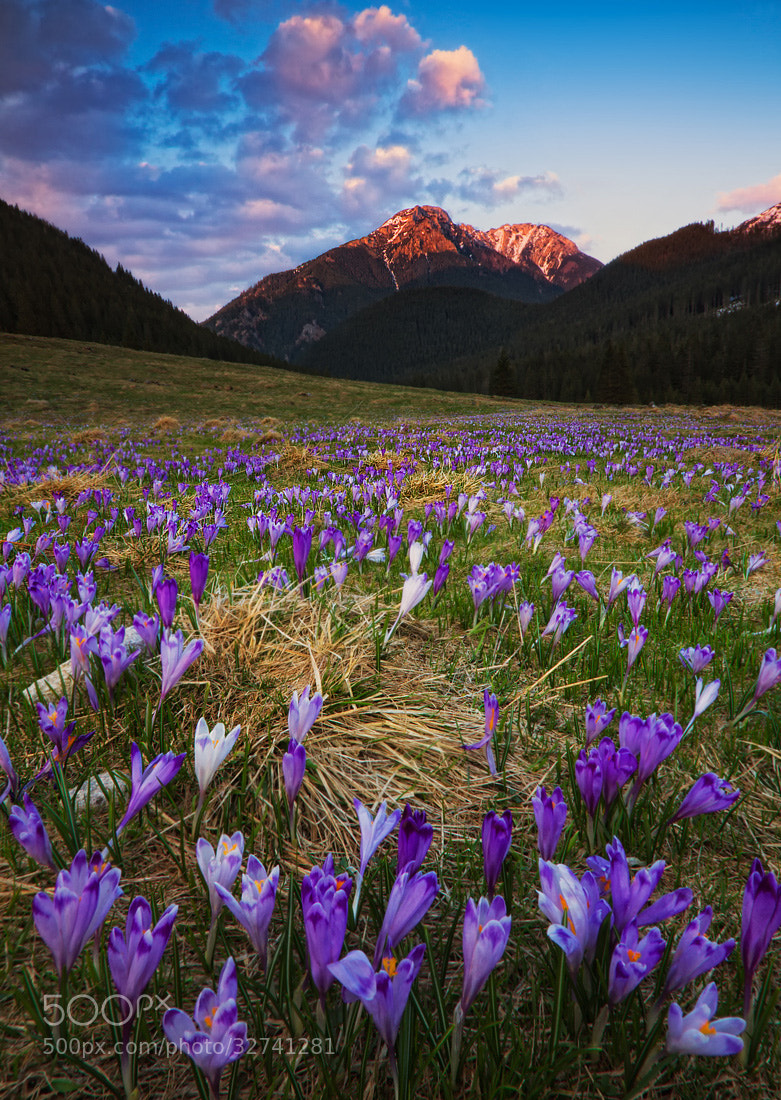 Photograph Spring in Tatras by Paweł Uchorczak on 500px