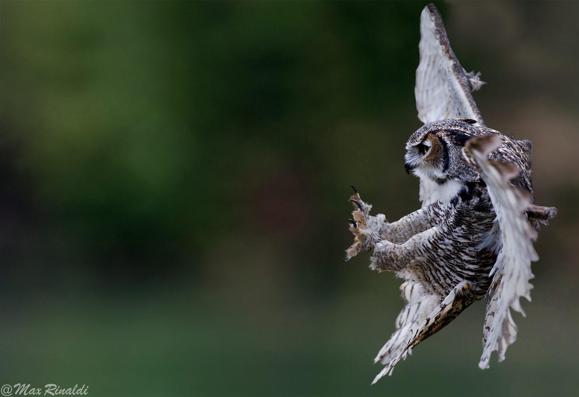 Photograph Landing by Max Rinaldi on 500px